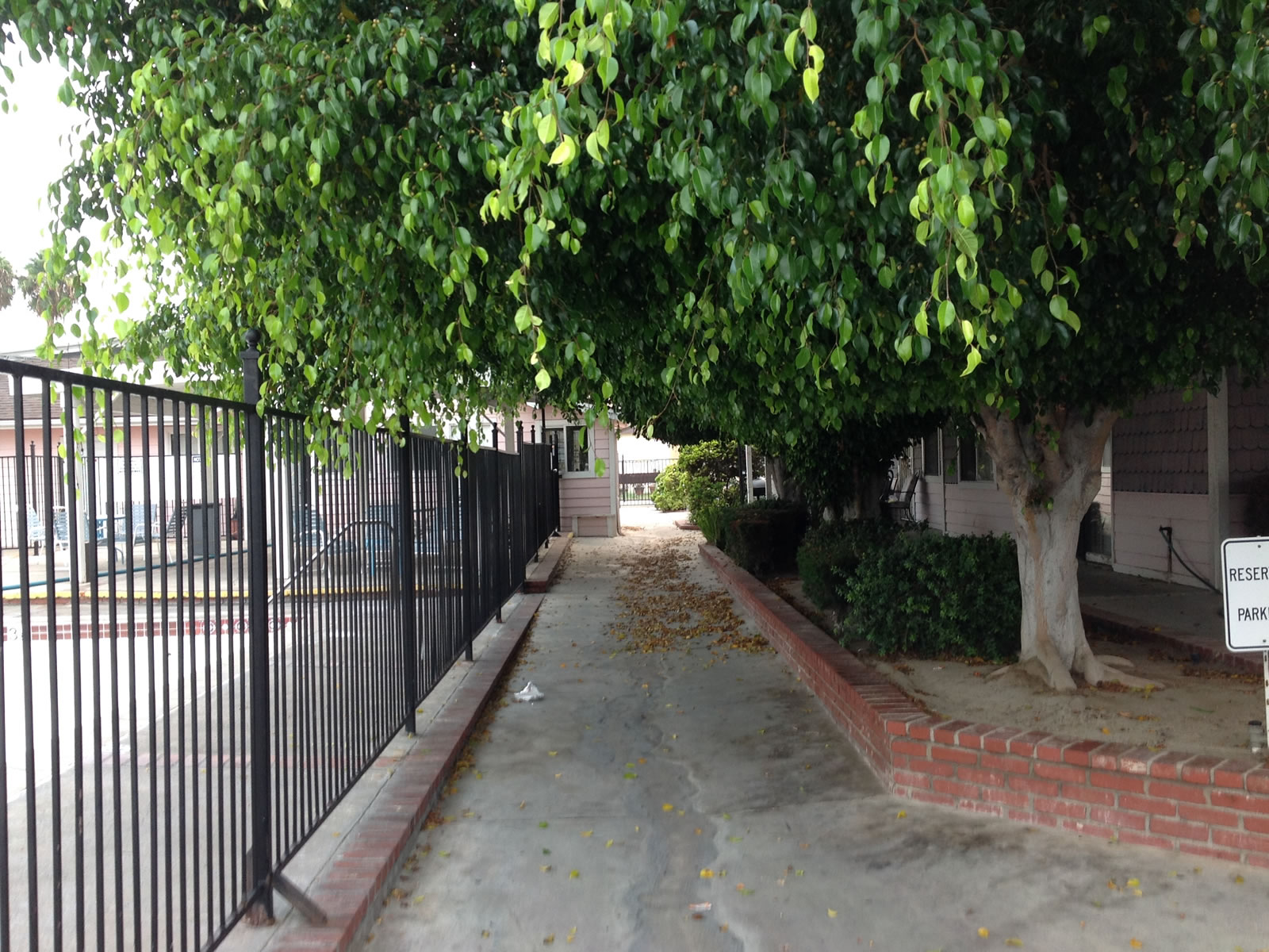 Tustin Village Mobile Home Park Overgrown Trees Throughout